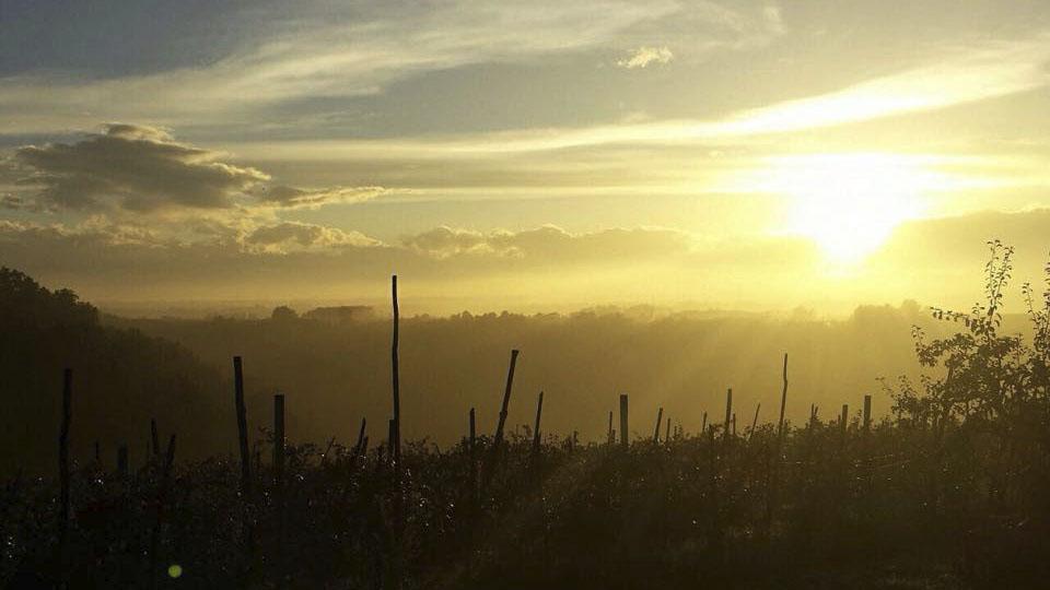 Il tramonto sulle nostre vigne