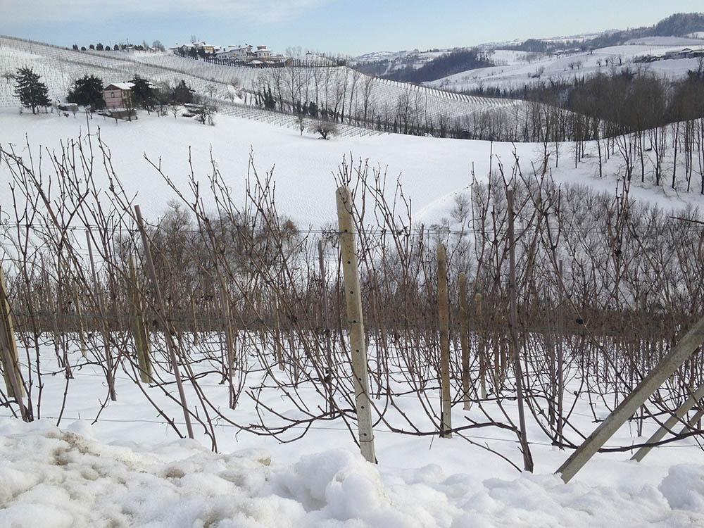 Neve nei filari